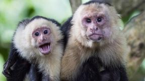 What Do Monkeys and Humans Have in Common?