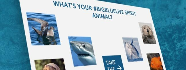 Image of What's Your #BIGBLUELIVE Spirit Animal?