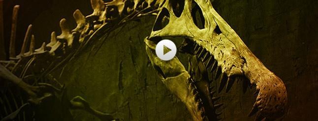 Image of Bigger Than T. rex