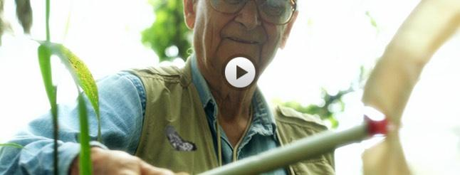 Image of E.O. Wilson – Of Ants and Men