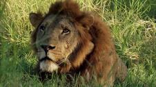 Tonight on Gorongosa Park: Battle Lines