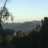 The Black Hills and The Mountain Pine Beetle