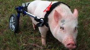 My Bionic Pet Features Inspiring Disabled Animals