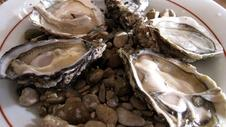 Shucked Oysters with Two Sauces