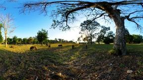 Explore Gorongosa National Park with 360º Virtual Reality