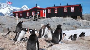 3,000 Gentoo Penguins Visit the Post Office