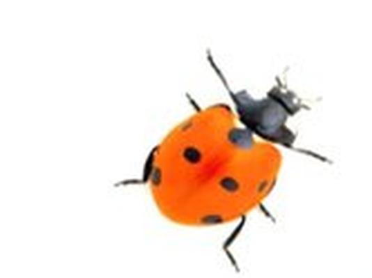 Dinosaur Discoveries – Beetles