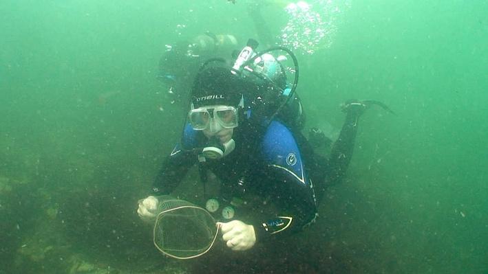 Tropical Fish Rescue