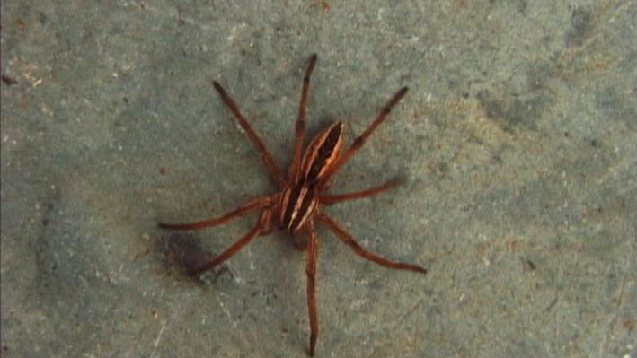 backyard bugs wild tv english language arts and literacy science