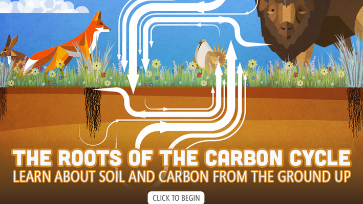 The Roots of the Carbon Cycle