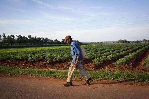 What Can We Learn from Cuba's Organic Farms?
