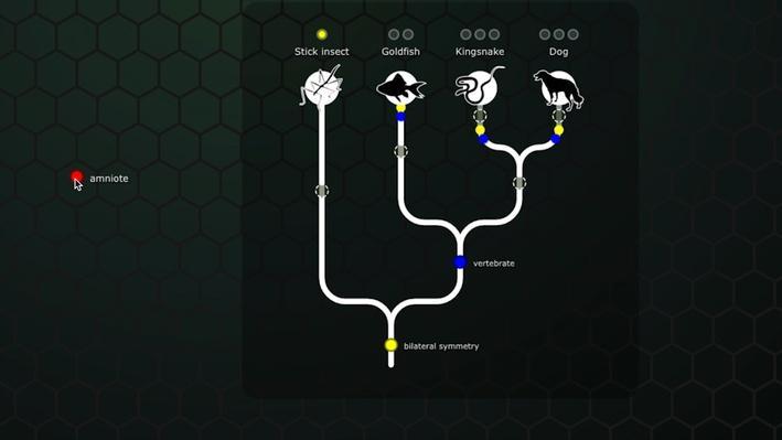 NOVA Evolution Lab Lesson Plan | Science | Classroom ...