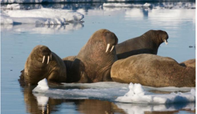 A Warmer World for Arctic Animals