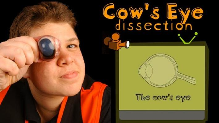Cow s Eye Dissection   Science   Interactive   PBS