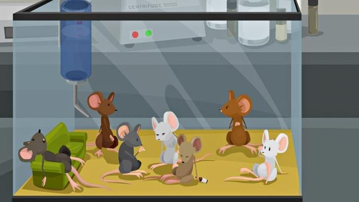 The New Science of Addiction: Genetics and the Brain Mouse ...