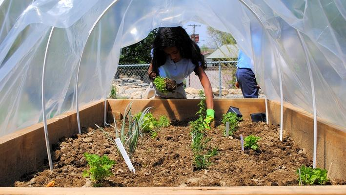 Think Garden: Cool Crops