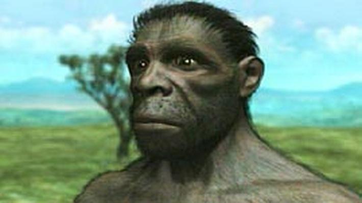 evolving ideas  did humans evolve
