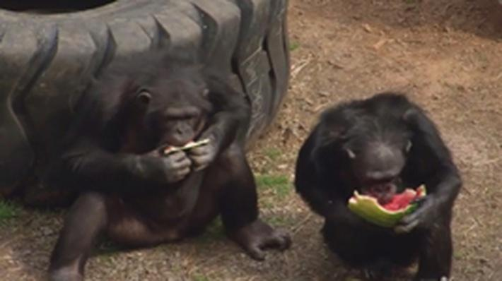Chimp Politics