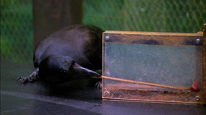 Nature | A Murder of Crows: Hook, Line and Sinker