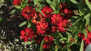 Backyard Farmer: Plants with Hearts