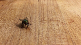 401: Insect Flight