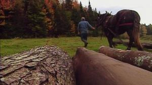 Covered Bridges/Barn Raising & Conversion/Logging