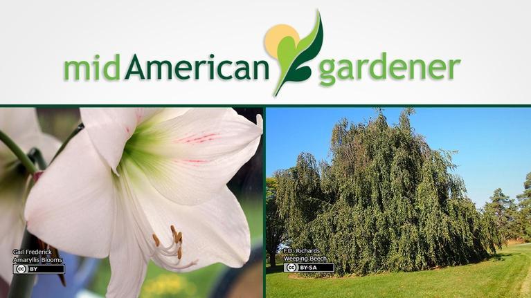 Mid-American Gardener: Mid-American Gardener with Sandy Mason November 2, 2017