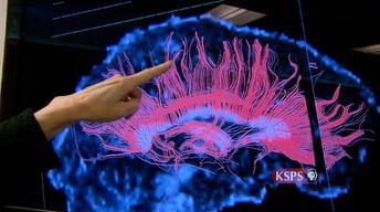 Inside Babies' Brains
