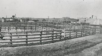 Sioux Falls Stockyards - The Beginning