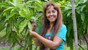 Your Story: Mango Expert