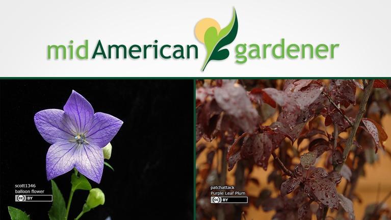 Mid-American Gardener: Mid-American Gardener with Sandy Mason October 12, 2017
