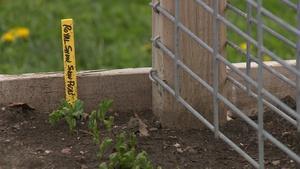 Backyard Farmer Tips on Ash Tree Management