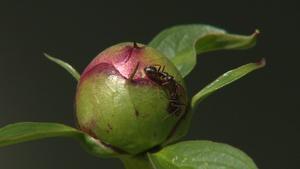 Backyard Farmer: Benefits of Ants