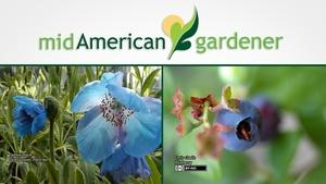Mid-American Gardener with Dianne Noland August 31, 2017