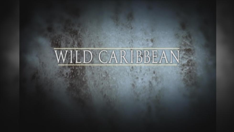Wild Caribbean Promo image