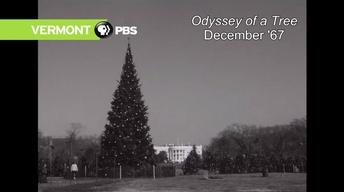 Odyssey of a Tree, December 1967