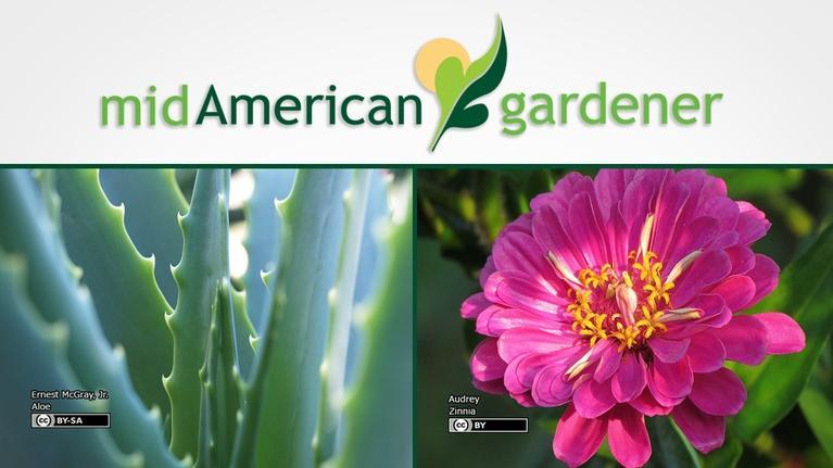 Mid-American Gardener: Mid-American Gardener with Sandy Mason January 4, 2018