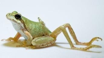 S44: Why Does This Frog Have So Many Legs?!