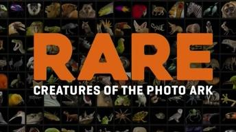Rare: Creatures of the Photo Ark : Episode 1