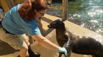 Exploring the Louisville Zoo