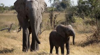 S36 Ep1: Naledi: One Little Elephant