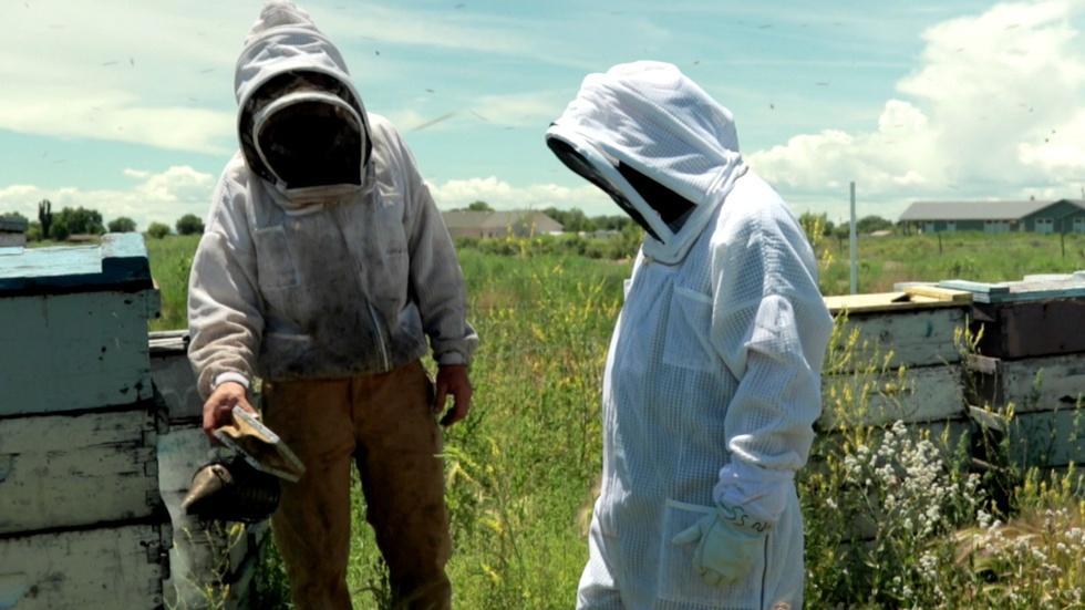 A Bee's Food: Honey image