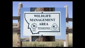 Back From The Brink: Montana's Wildlife Legacy Part 2