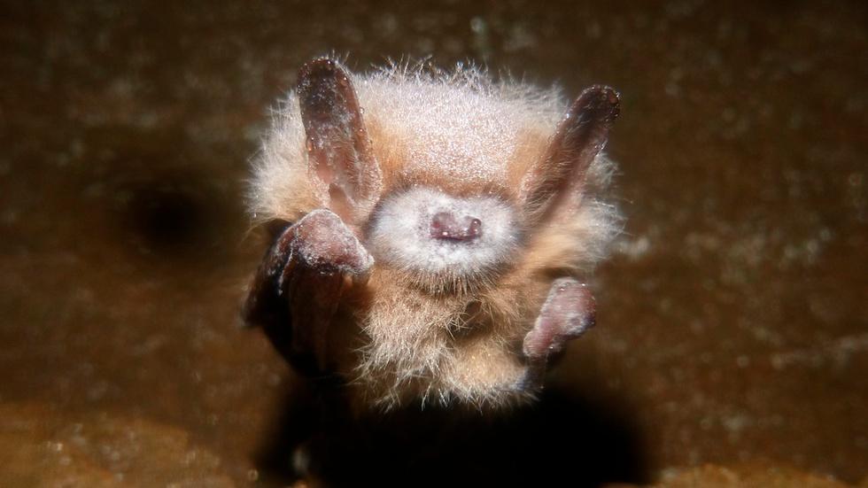 Saving Bats image