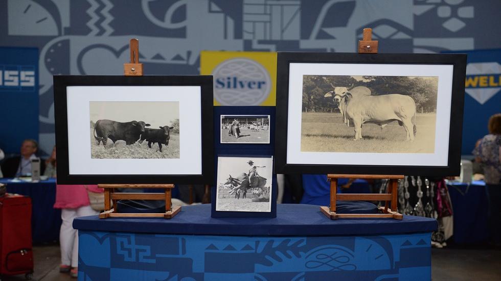Appraisal: John Stryker Bull Photographs, ca. 1945 image