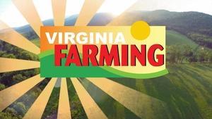 Virginia Farming: Draft Horses