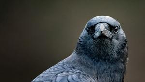 S44 Ep20: Bird Brain