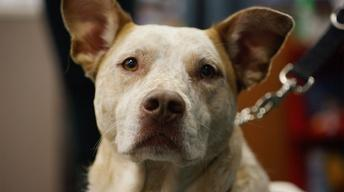 Stiggy's Dogs Service Project