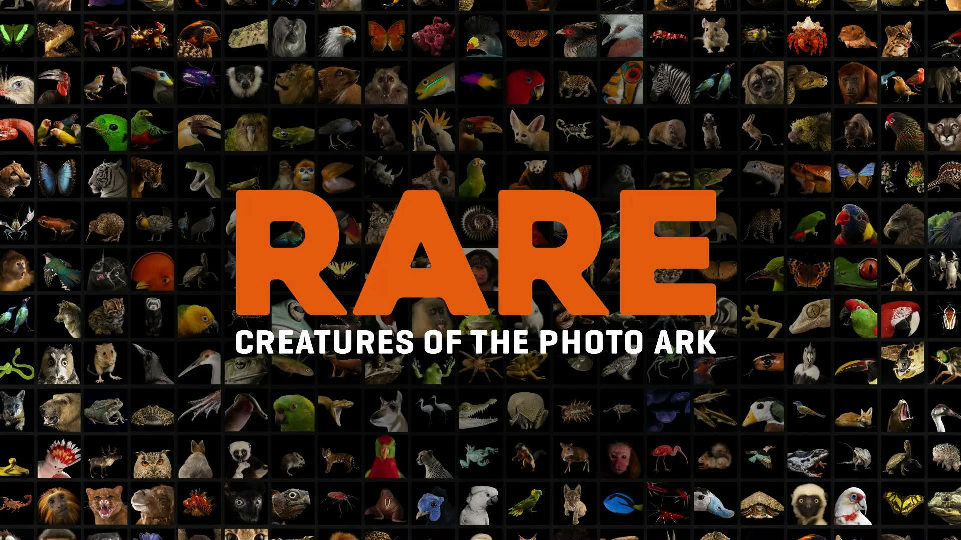 Rare: Creatures of the Proto Ark | Preview