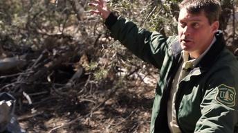 Wildland Trail Preview